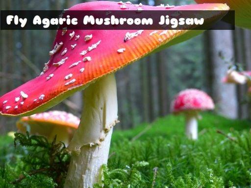 Play Fly Agaric Mushroom