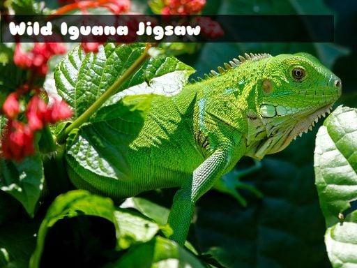 Play for fre Wild Iguana