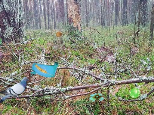Бернати Лесные приключения