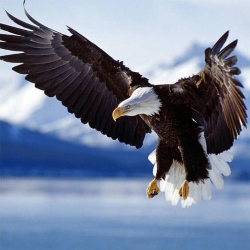 Animals Jigsaw Puzzle - Eagle